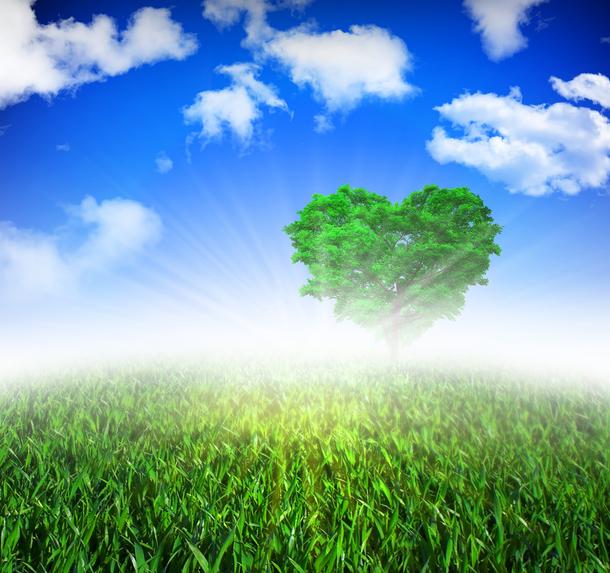 Los efectos de la calidad del aire en la rehabilitación cardiovascular