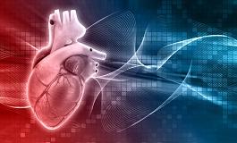 Anatomía Del Corazon Fundación Española Del Corazón