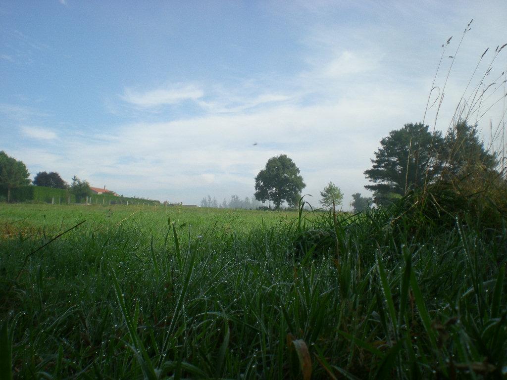 Un auténtico paraíso de hierba